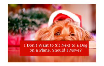 Sit Next to a Dog on a Plane